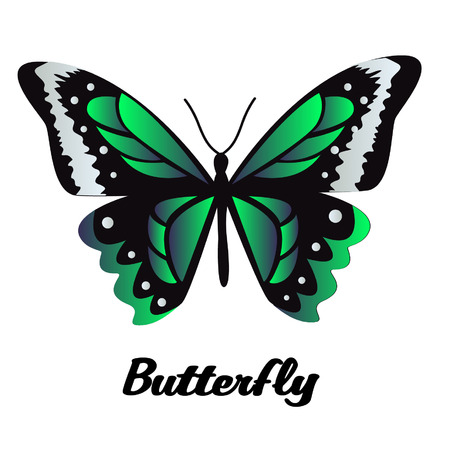 Black and Green Butterfly on White Background Vector Image Illustration