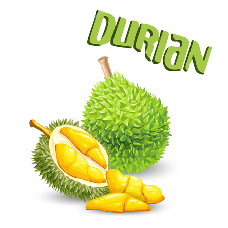 Fruit Durian White Background Vector Image