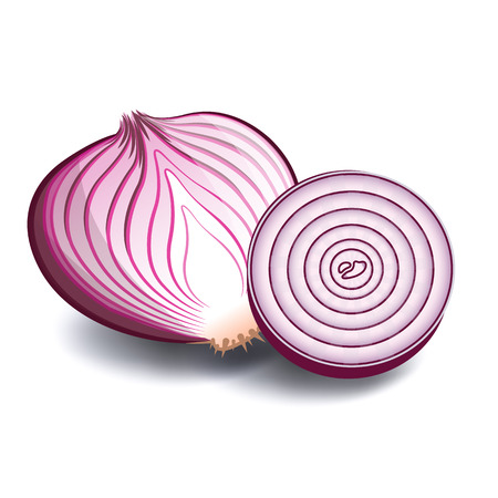 Vegetable Icon Red Onion White Background Vector Image