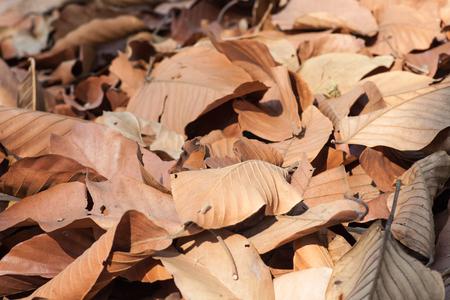 dried leaf: Dried leaf ackgronds.