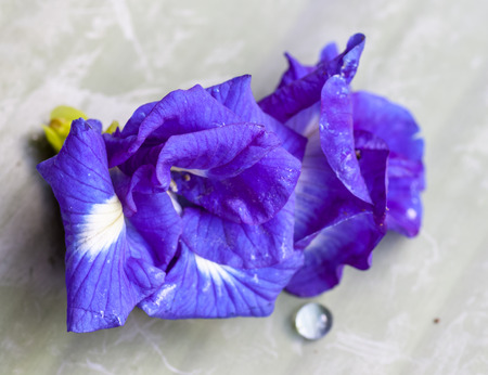 pigeon pea: Butterfly pea flower medicinal herbs to treat disease and certain types of food coloring to make purple toxic safe.
