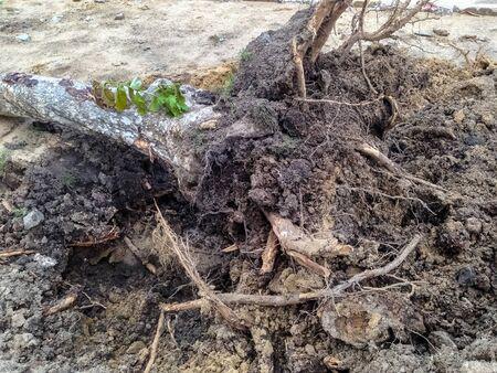 toppled: Trees toppled