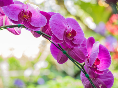 orchidea: Orchids With blurred background