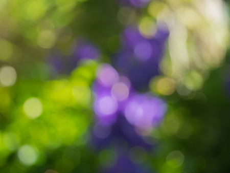 hidef: Bokeh background blur Stock Photo