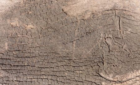 wood surface: The surface of old wood Stock Photo