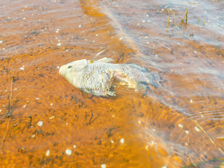 Dead fish in the water represents a bad environment.
