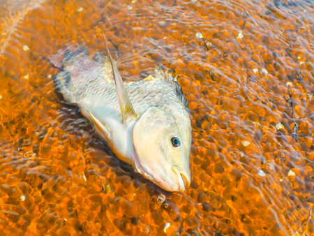 developed: Dead fish in the water represents a bad environment.