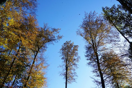 Clearing in forest with leafes in the sky Stock Photo