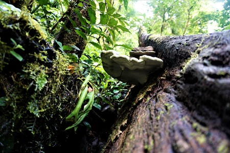 Trunk with bracket fungus in the Curicancha Reserve, Costa Rica