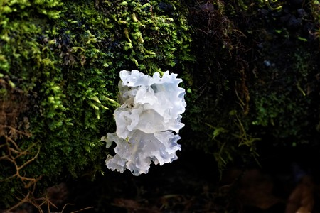 White fungus growing on a branch spotted in Costa Rica Stok Fotoğraf