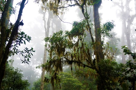 Mysterious foggy forest in Los Quetzales National Park, Costa Rica Imagens