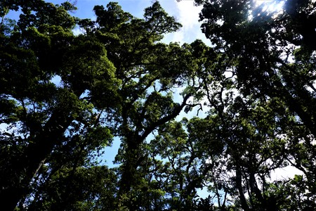 Trees and sky in the Los Quetzales National Park on a sunny day Imagens - 105673450