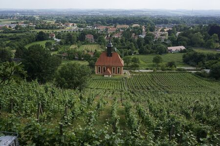 View over the vineyards of Dresden Pillnitz, Germany Banque d'images