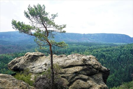 A single Scots pine on the viewpoint of the Kanzel mountain in Saxon Switzerland, Germany