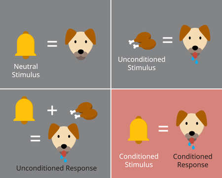 classical conditioning or Pavlovian or respondent conditioning for learning new stimulus Vecteurs