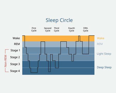 sleep circle with sleep stage to analysis of brain activity during sleep Vektoros illusztráció