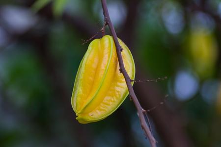 carambola: Carambola, also known as starfruit.