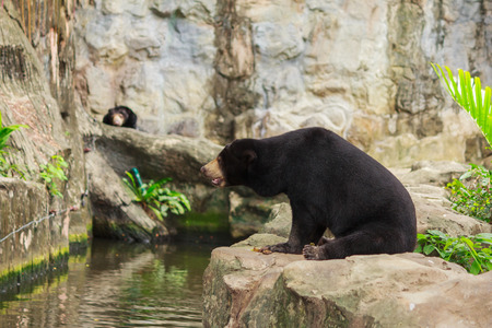 Malayan Sun Bear is the smallest bear in the world.