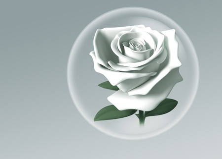 white rose in glass ball model 3D.Isolated on background photo