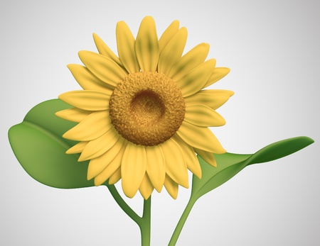 sunflower on white background. Isolated 3d model photo