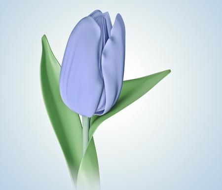 blue tulip: 3D blue color tulip flower