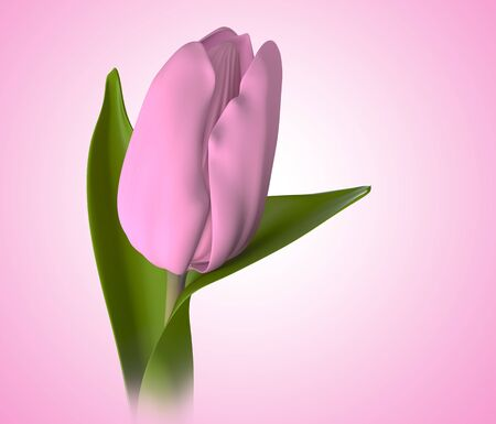 bulb tulip: 3D pink color tulip flower