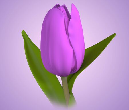 bulb tulip: 3D purple color tulip flower Stock Photo