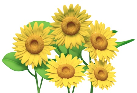 big daisy: sunflower on white background  Isolated 3d model