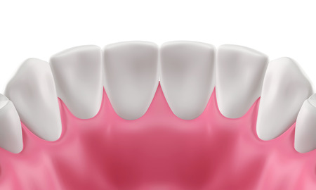 3D teeth or tooth illustration, inside view isolated