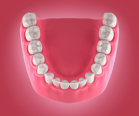 mouth open: 3D teeth or tooth illustration, top view
