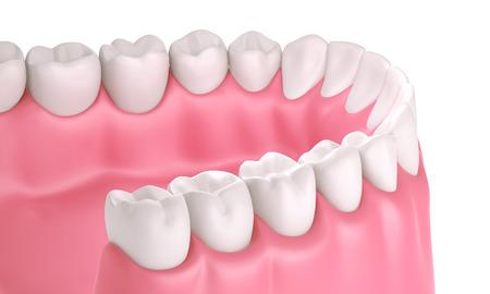 3 D 歯または歯の図、分離した口の中で分析観点ビュー
