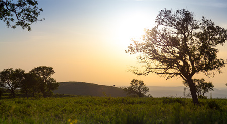 Landscape on a plateau with trees in a counter-light at sunset. Stock Photo