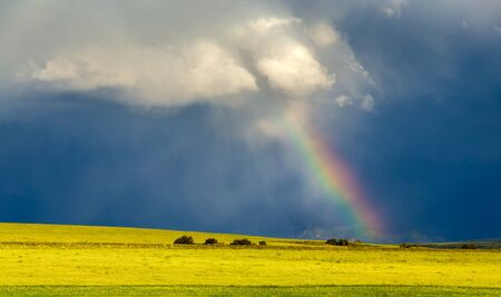 Rainbow shines from clouds on a dark background in a wheat field.