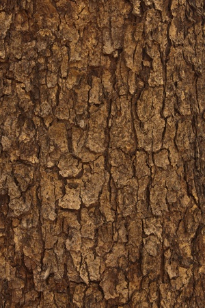 wall textures: Background of the wood. Stock Photo