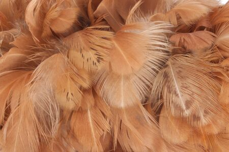 chicken feather color brown is background