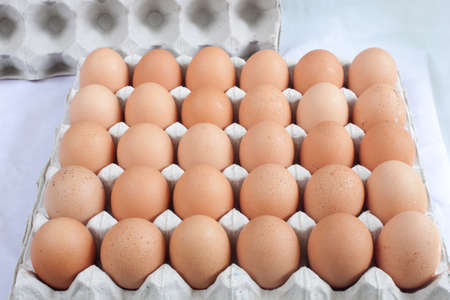 eggs chicken is a white background photo