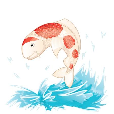 kohaku: Koi Fish Illustration