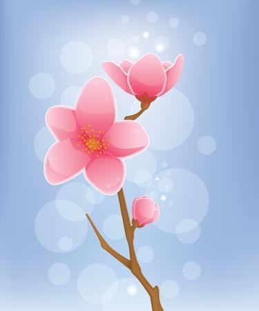 Spring Concept - Cherry Blossom Stock Vector - 21716602