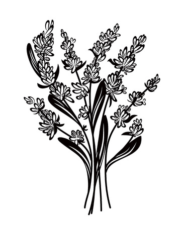 lavender: Lavender Illustration