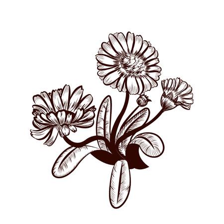 calendula flower: Marigold