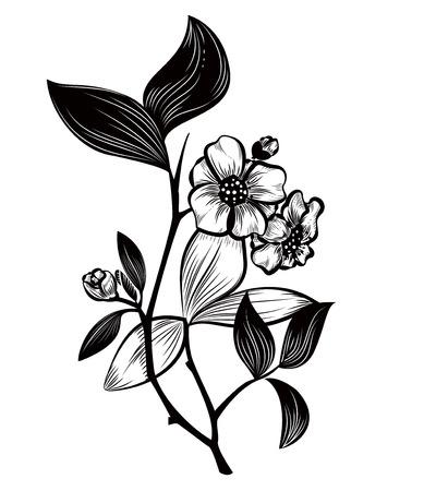 camellia: Tea plant