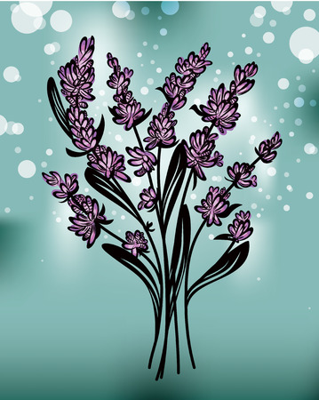 lavander: Lavender Illustration