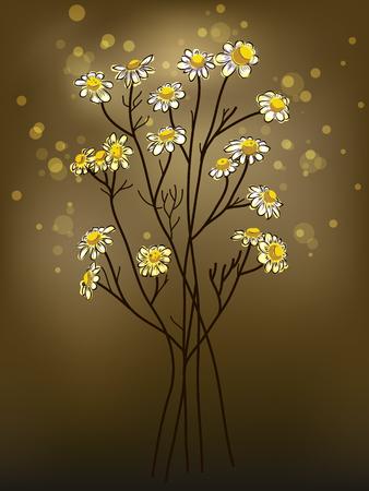 chamomilla: Chamomile