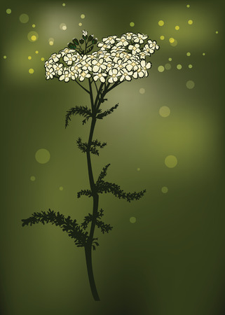 Yarrow Vector