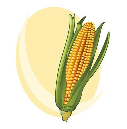 Corn 矢量图像