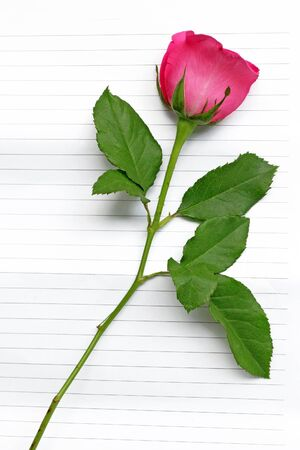 pink roses on notepaper photo
