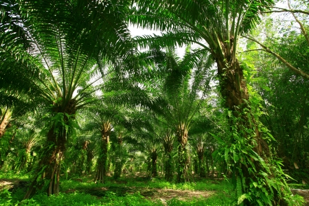 Palm forest photo