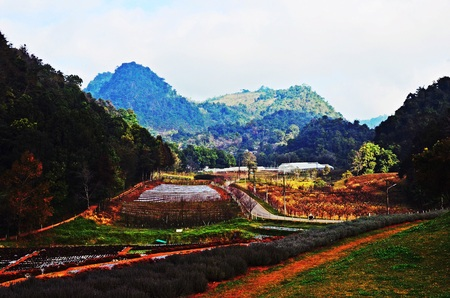 doi: Doi Ang Khang over view