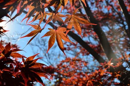 Mt. Fuji, Japan at Lake Kawaguchi during the autumn season. Stock Photo