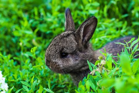 little fluffy rabbit lurking in the green grass. Little bunny in the meadow